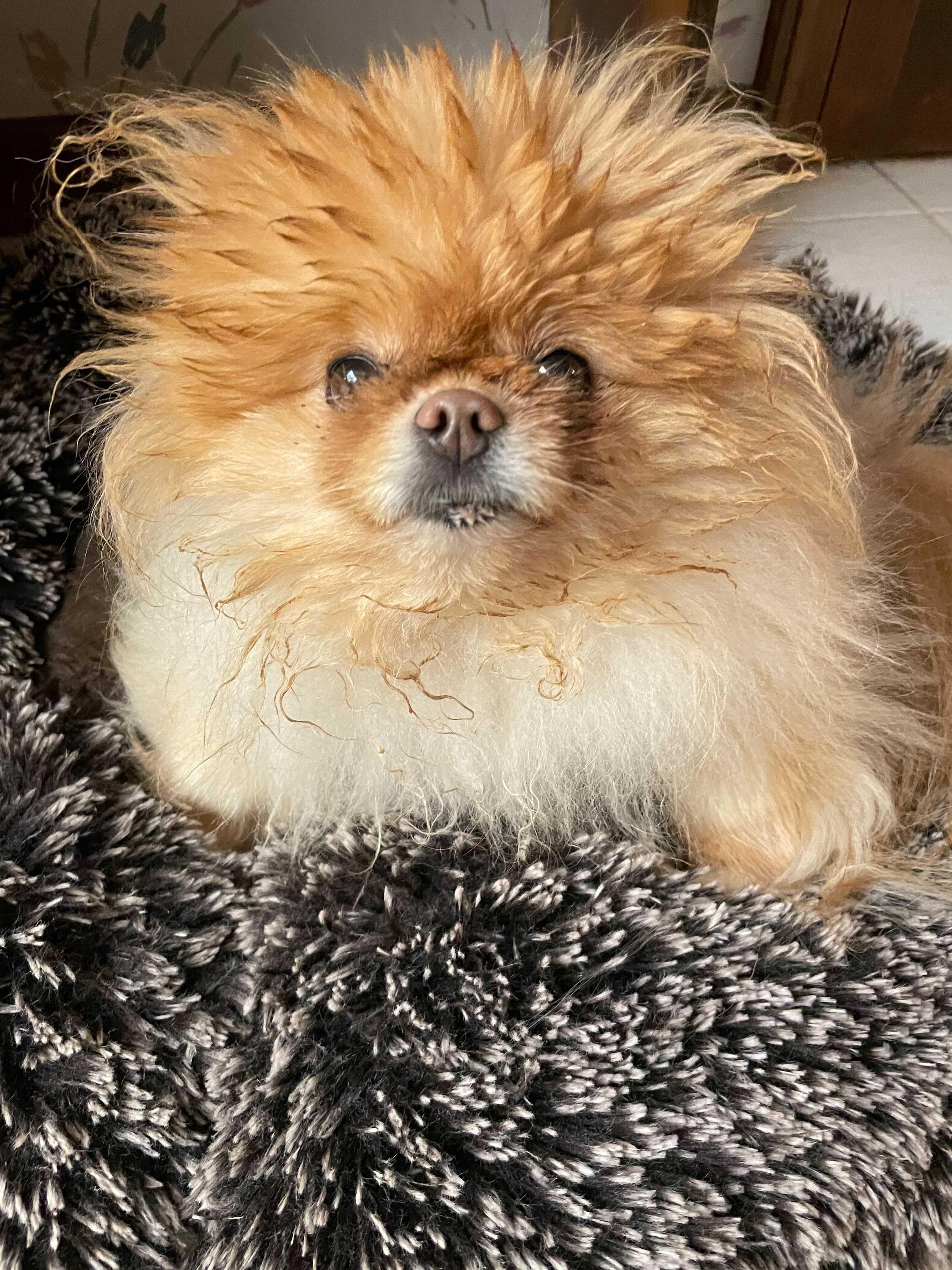 Lola before bath time.