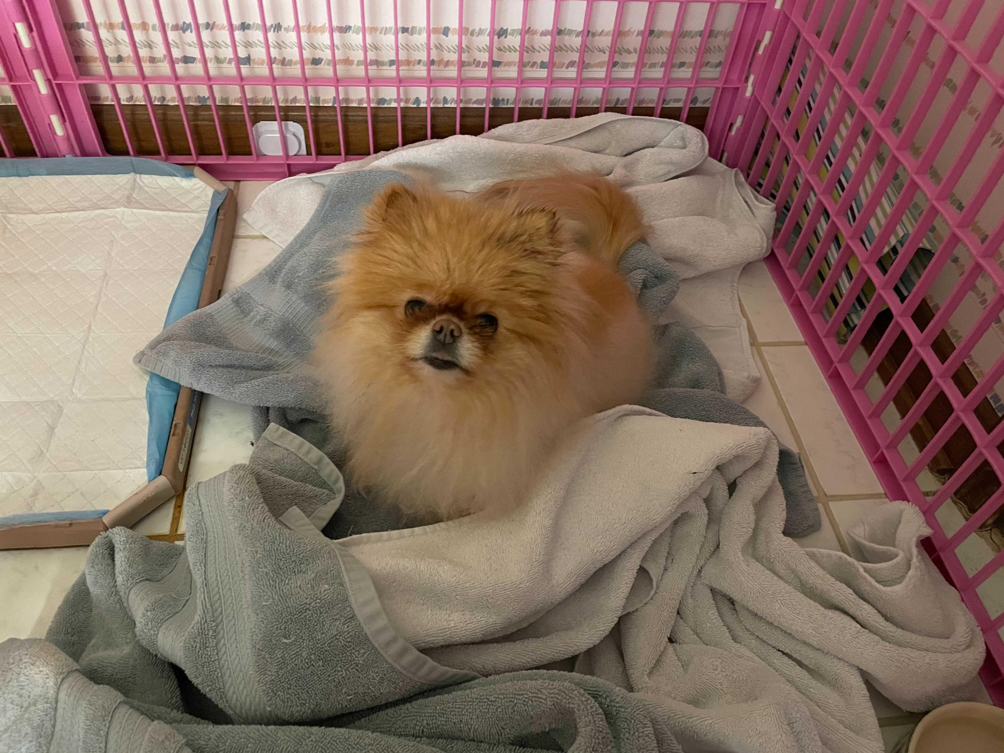 Lola after her bath.